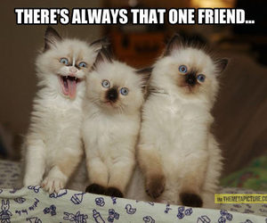 cat, funny, and friends image