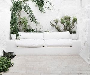 plants, white, and home image