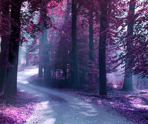 tree, purple, and beautiful image