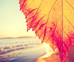 beach and leaf image