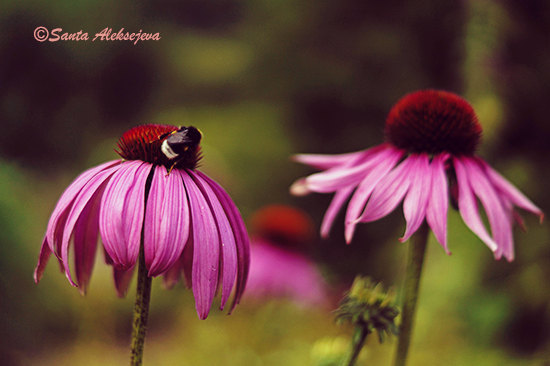 bumble bee, etsy, and flower image