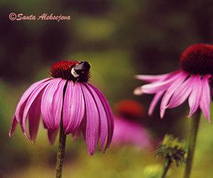 bumble bee, flower, and photo print image