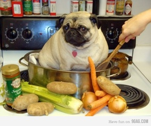 funny, pug, and dog image