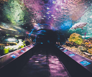 aquarium, fish, and colors image