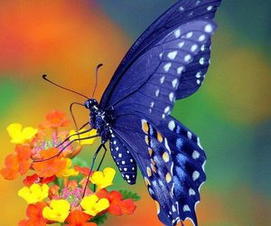 blue, colored, and butterfly image