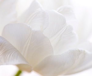 flowers, white, and photography image