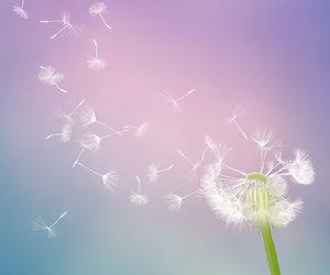 dandelion and purple image