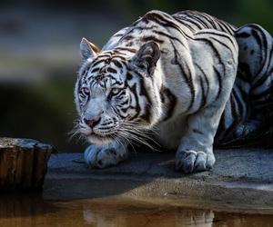 animal and naturaleza felina image