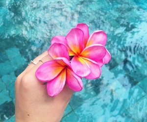 flowers, pink, and summer image