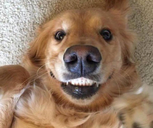 smile, dog, and cute image
