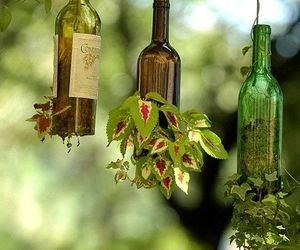 plants, bottle, and green image