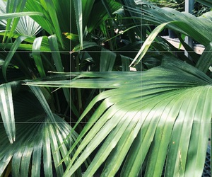 green, tropical, and plant image
