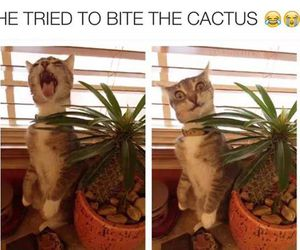 cat, funny, and cactus image
