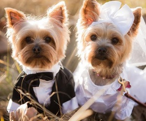 dog and wedding image