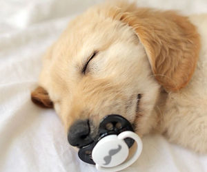 bed, pacifier, and puppy image