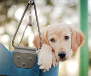 dog, funny, and home image