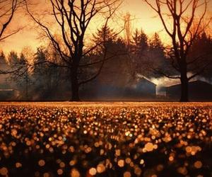 autumn, tree, and light image
