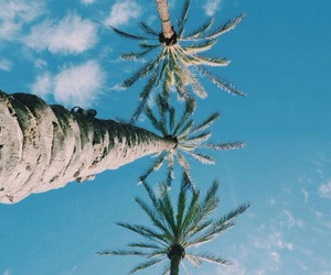 palm trees, summer, and blue image