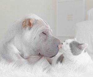 dog, cat, and kiss image