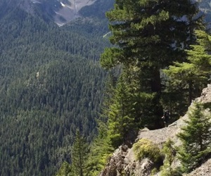 mountain, trees, and nature image