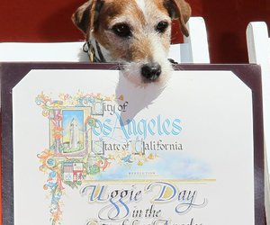 dog, uggie, and jack russell terrier image