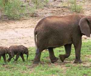 animals, twin elephants, and extremely rare image