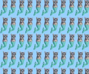 cat, mermaid, and wallpaper image