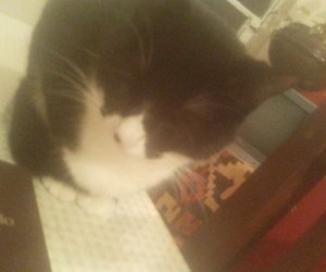 cat, sleeping, and sugus image