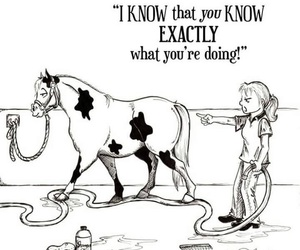 horse, funny, and wallpaper image