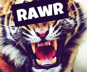 rawr, tiger, and animal image