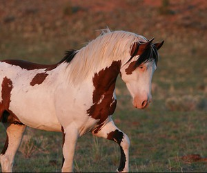 equestrian, riding, and horse image