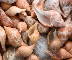 shell and beautiful image
