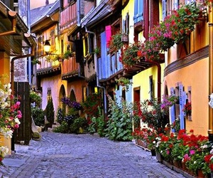 france, flowers, and alsace image