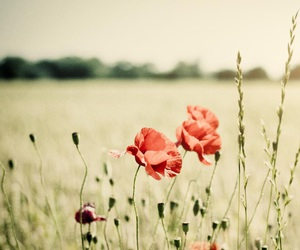 field, grass, and flowers image