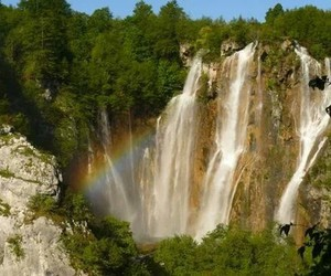 green, nature, and rainbow image