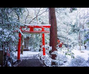 japan, kyoto, and nature image