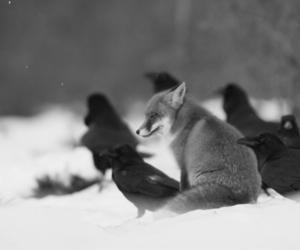 fox, raven, and animal image