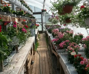 finland, florist, and flowers image