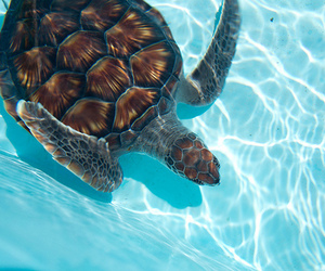 turtle, summer, and water image