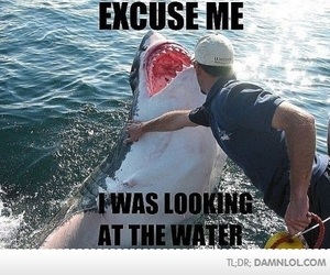 shark, funny, and water image