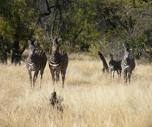 africa and zebra image