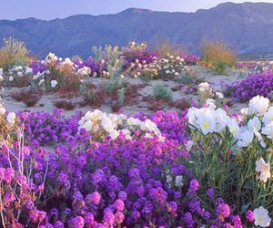 beautiful, desert, and flowers image