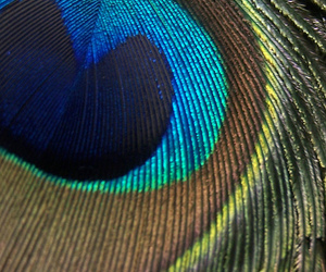 bird, green, and blue image