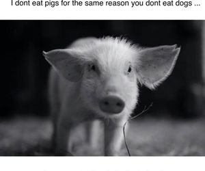 animal, pig, and vegan image