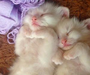 kitten, white, and love image