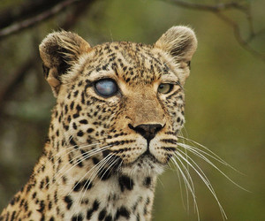 animal, cute, and eye image