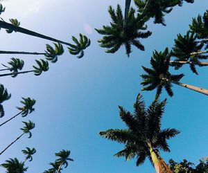 blue, palm trees, and sky image