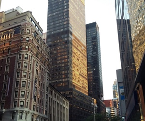 buildings, empire state, and live image