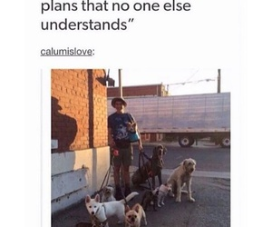 adorable, dogs, and punk image