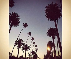 palm trees and los angeles image
